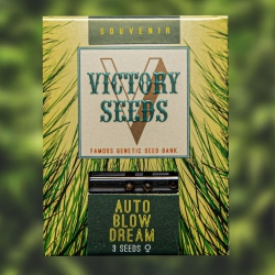 Auto Blow Dream - VICTORY SEEDS