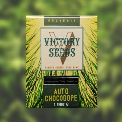 Auto Chocodope - VICTORY SEEDS