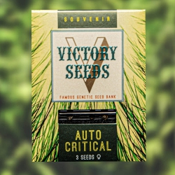 Auto Critical - VICTORY SEEDS