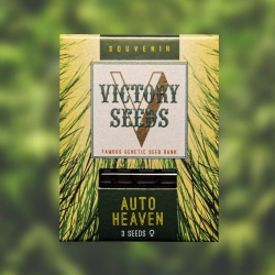 Auto Heaven - VICTORY SEEDS